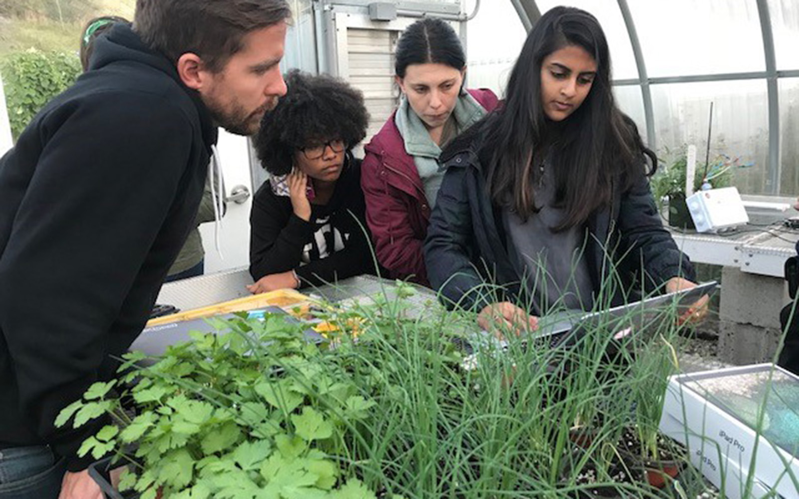Adjunct professor Ryan O'Connor consults students enrolled in an Internet of Things course that uses emerging technology to improve plant life at UConn's Spring Valley Farm. Students, from left, are Nicole Hamilton '19 (BUS), Tara Watrous '19 (CLAS), and Radhika Kanaskar '18 (BUS). (Claire Hall/UConn School of Business)